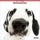 Der Hund Wand Kalender 2019Dalmatiner